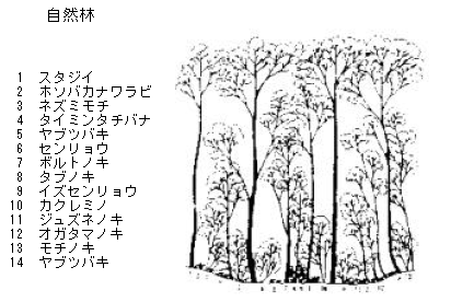 森林の階層構造